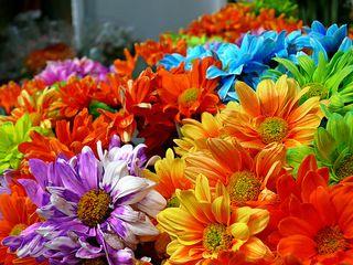 Flowero1