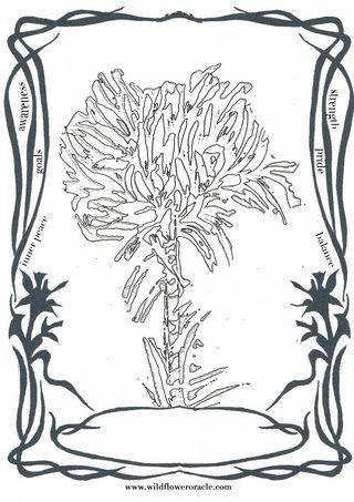 Cdarceygymealily