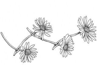 Daisy-chain-final2