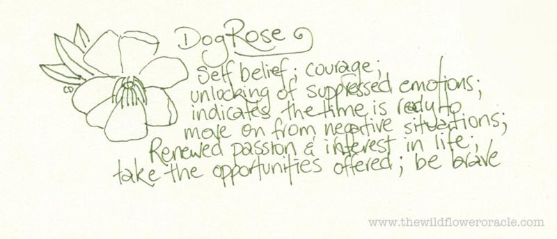 Dog Rose Cheralyn