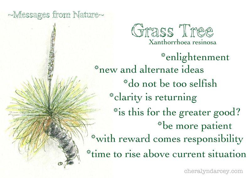 MNgrasstree