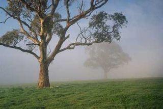 MistyTreesS