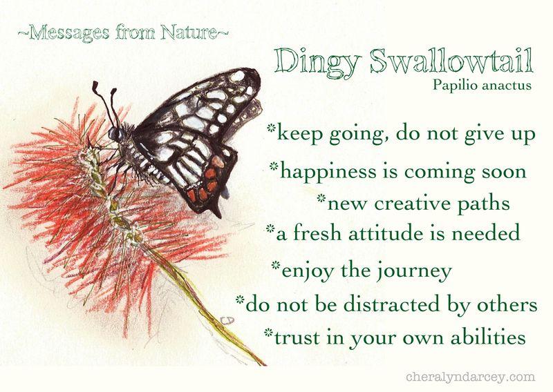 MNdingyswalowtail