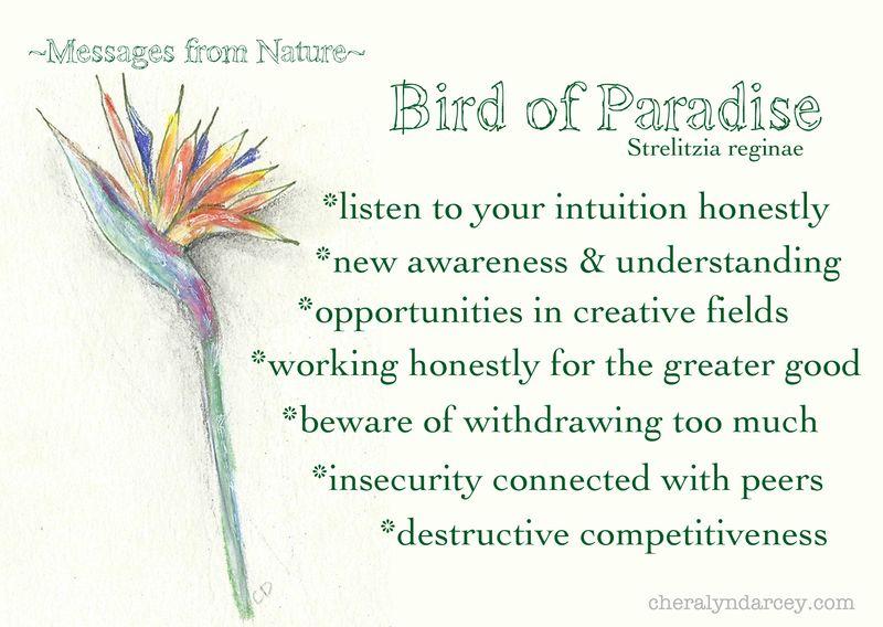 MN bird of paradise