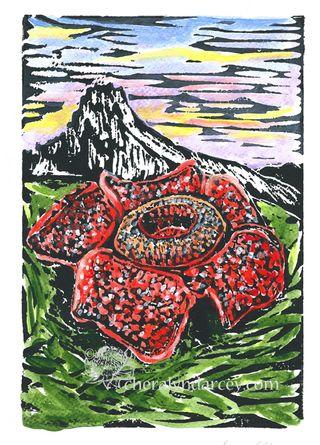WEB Rafflesia ~ CONSCIOUSNESS