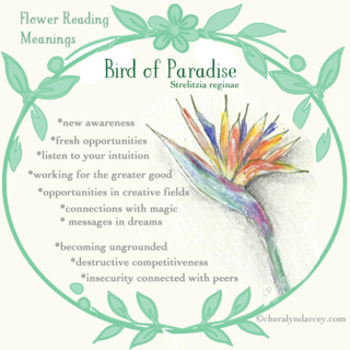 WEB NEW cards bird of patadise