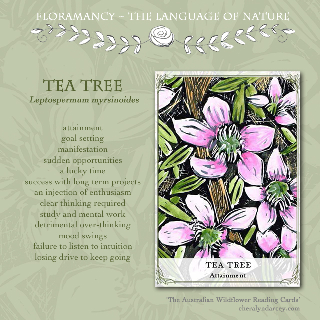Floramancy card meanings tea tree