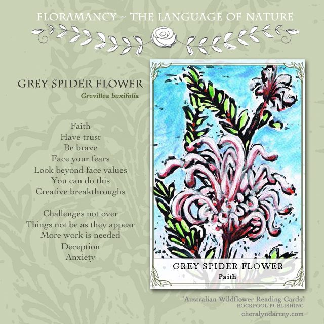 Floramancy card meanings grey spider flower