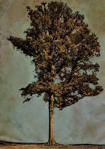 Steadfast oak