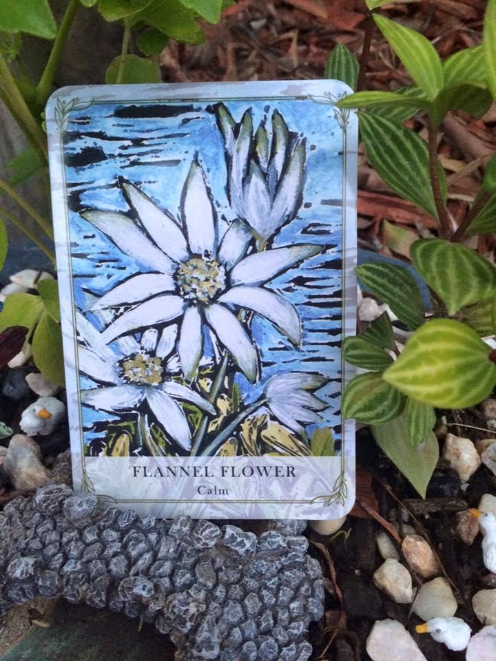WEB flannel Flower