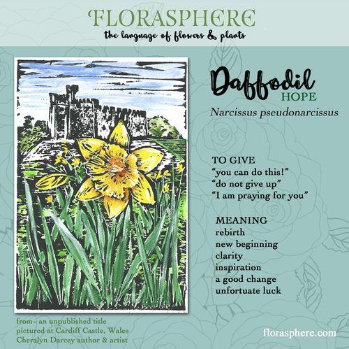 Web Card Daffodil