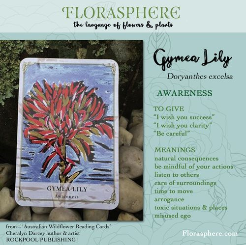 Webcards gymea lily