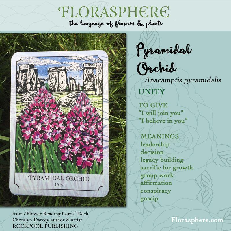 Webcards pyramidal orchid