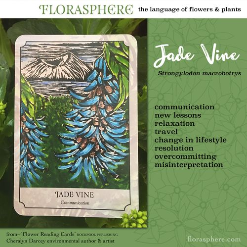 Jade Vine webcards 2