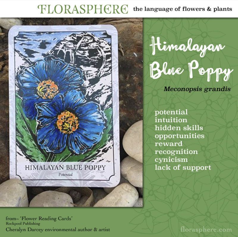 Webcards himalayan blue poppy