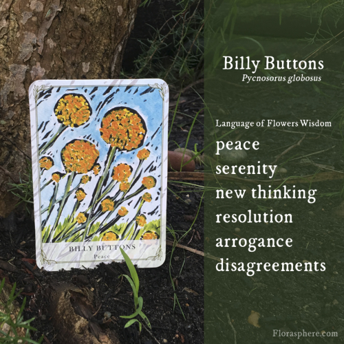 Billy buttons new webcards