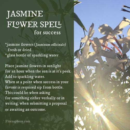 Jasmine spell 2