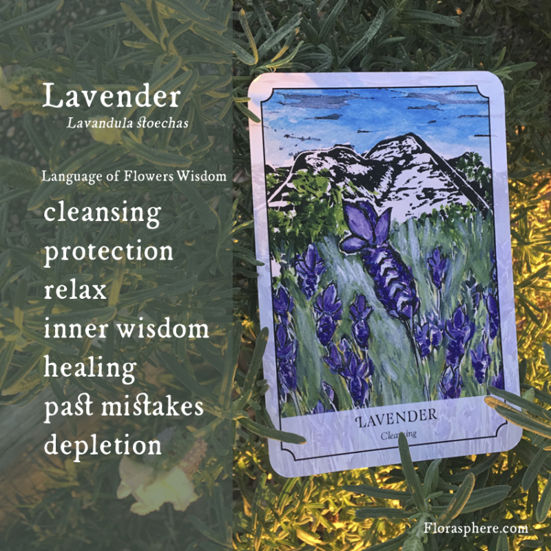 New cards lavender