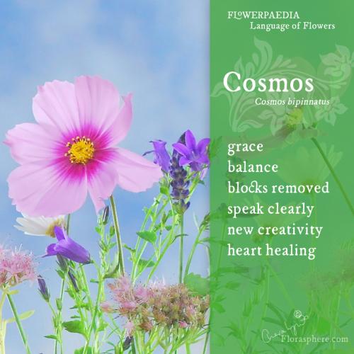 Cosmos webcard 2