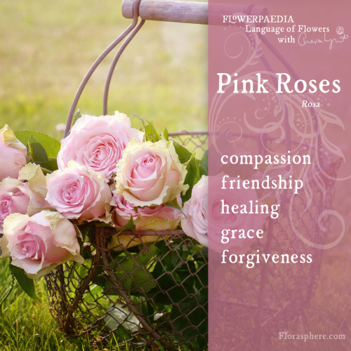 Pink roses WEDCARDS