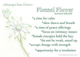 MNflannelflower