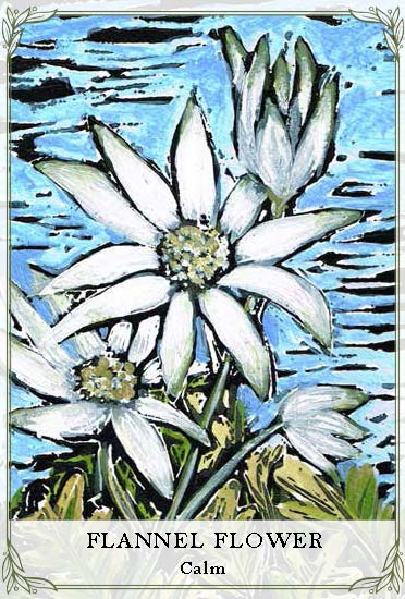 Wildflower_Cards - Samples Cropped 2_Page_13