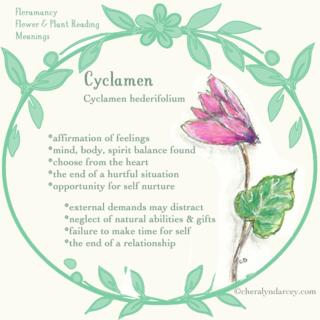 WEB Cards Cyclamen