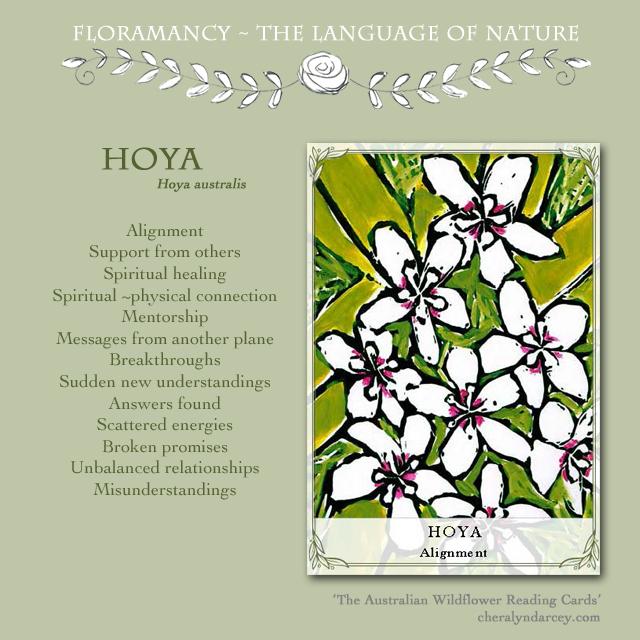 HOYA floramancy card meanings