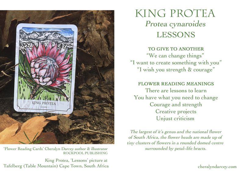 WEB cards King Protea