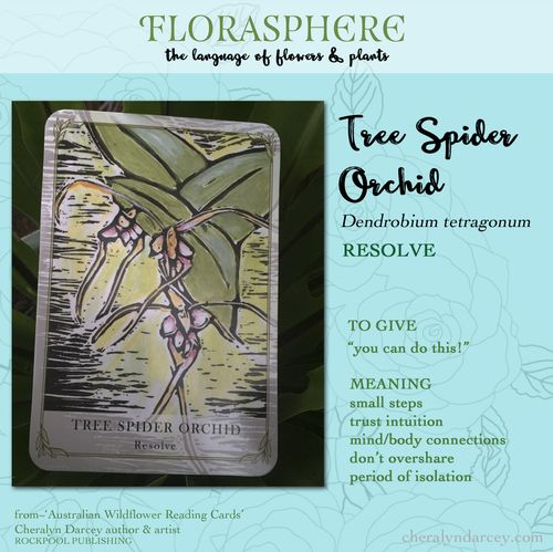 Card web tree spider orchid