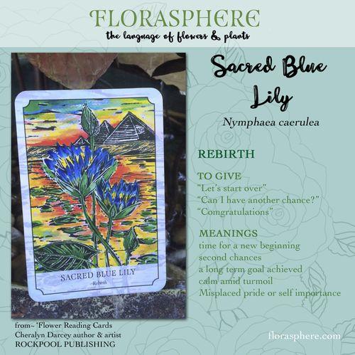Webcard Sacred Blue Lily