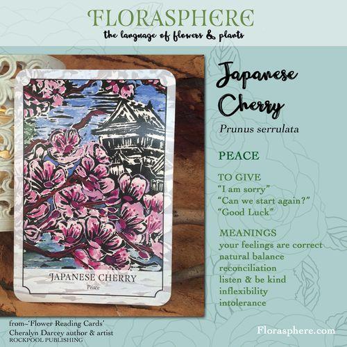 Webcards japanese cherry