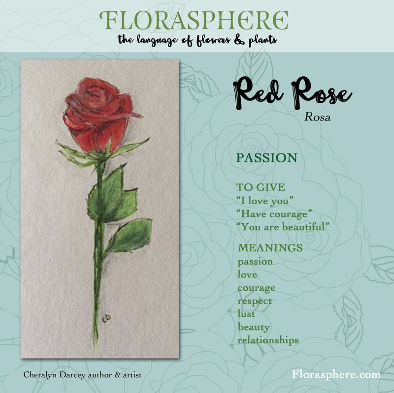 Webcards red rose 3