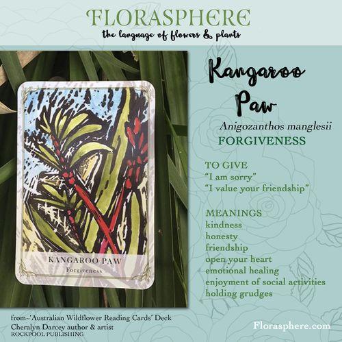 Webcards kangaroo paw