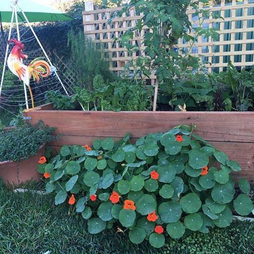 Garden this