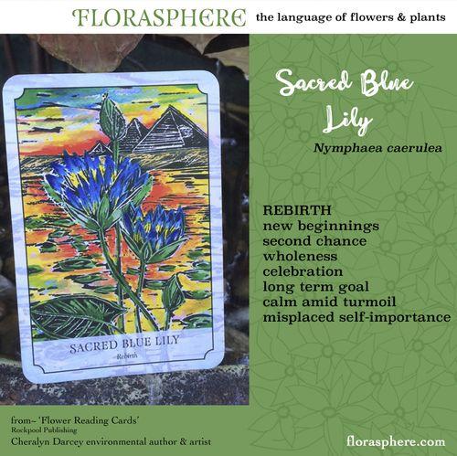 Webcards sacred blue lily