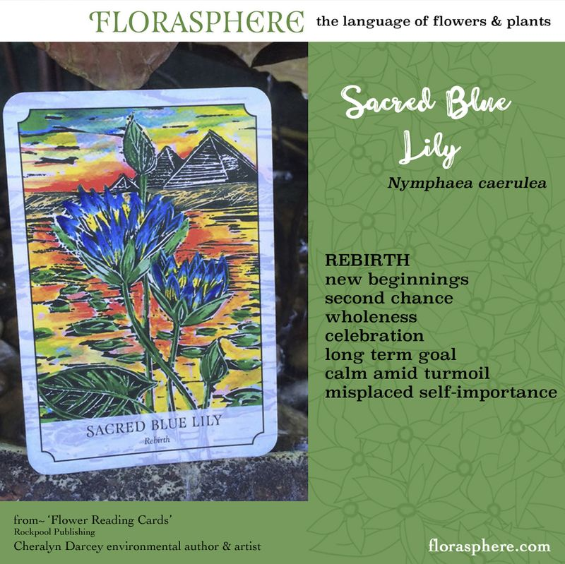 Webcards sacred blue lily