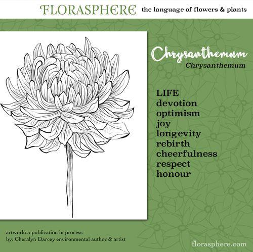 Webcards chrysanthemum 2