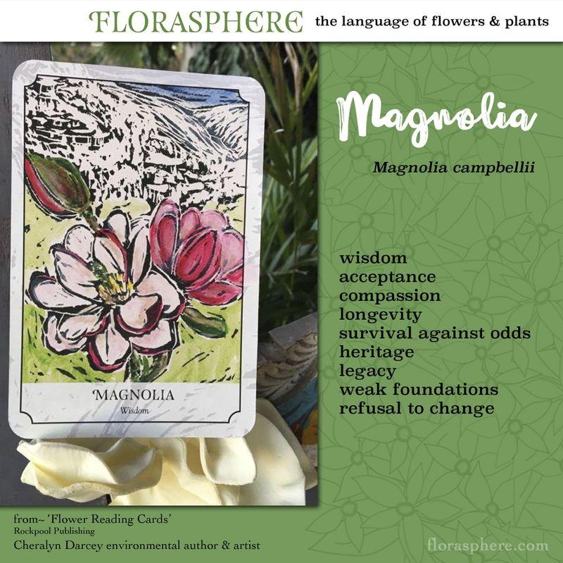 Magnolia webcards