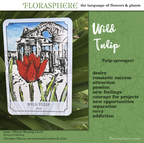 Webcards wild tulip 2