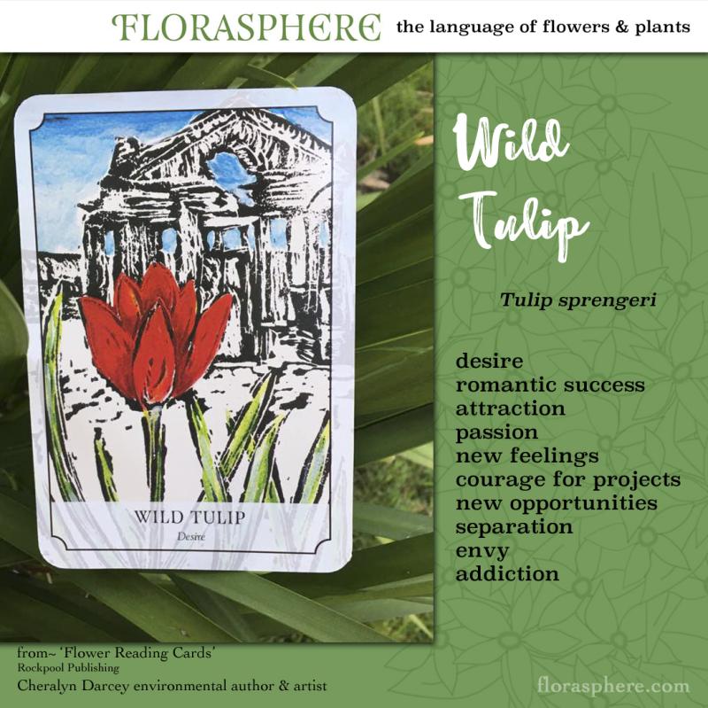 Webcards wild tulip 2