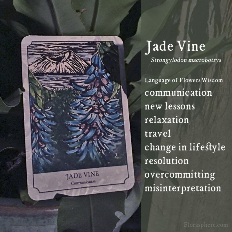 Jade vine new webcards