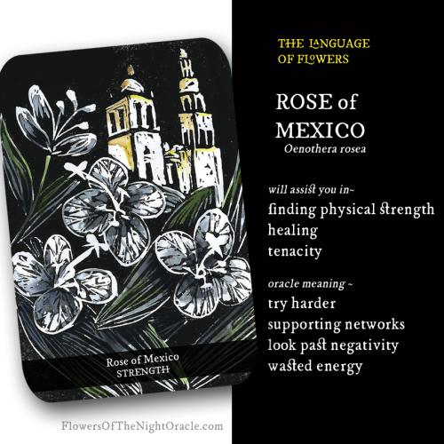 Ecards Rose of mexico
