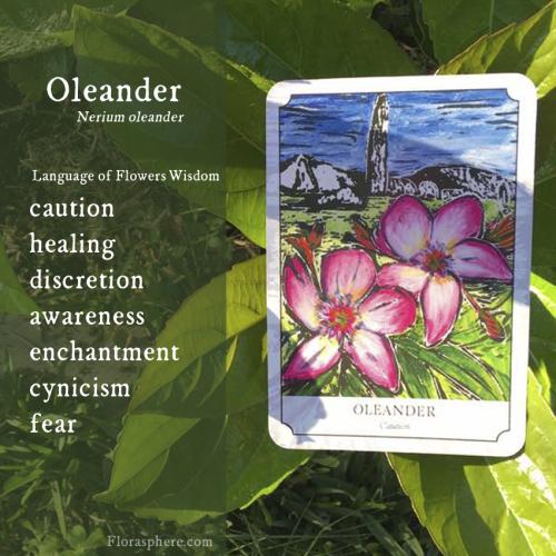 Oleander new photo webcards