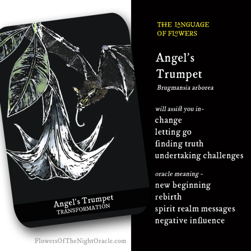 Angel's trumpet webcard