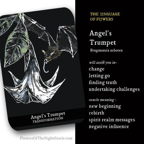 Angel's trumpet webcard