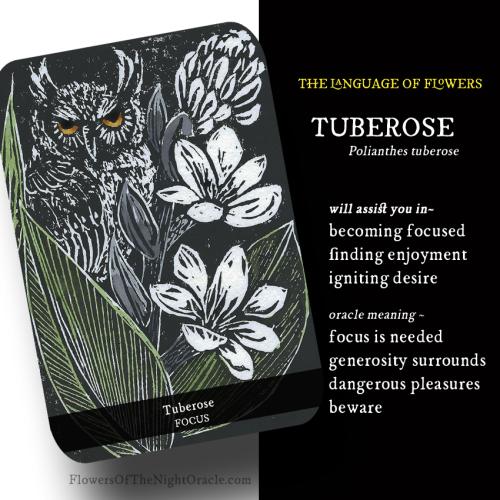 Tuberose WEBCARD new