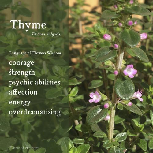 Thyme webcards