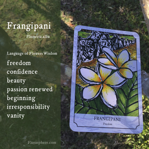 Frangipani new photo webcards