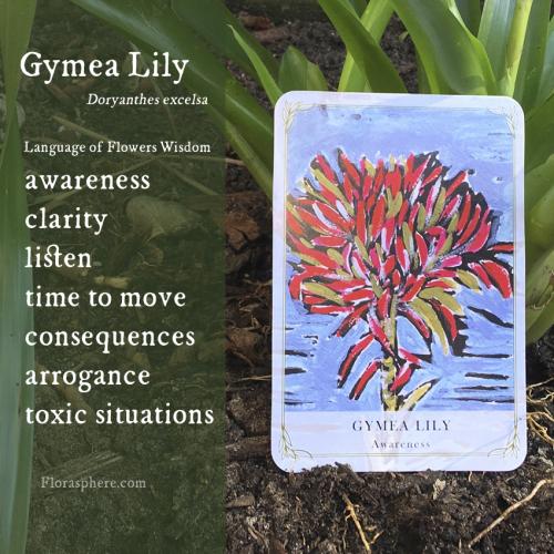 Gymea lily new photo webcards